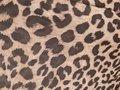 Blouse met tijgerprint